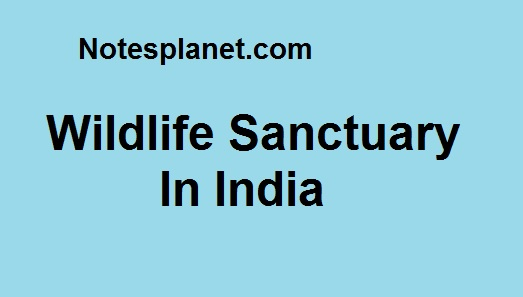 Wildlife Sanctuary In India